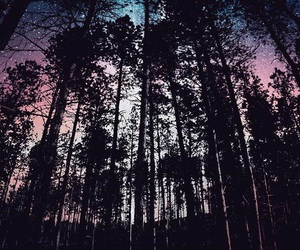 night, wallpaper, and forest image