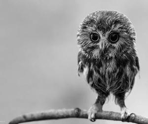 furry, cute, and owl image