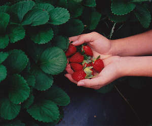 strawberry, photography, and hands image