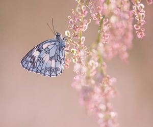 buterfly, flowers, and fly image