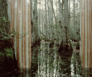 curtain, swamp, and witch image