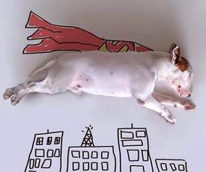 dog, funny, and superman image