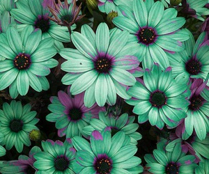 colours, flowers, and teal image