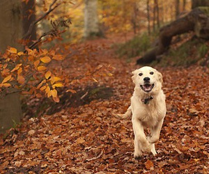 dog, fall, and autumn image