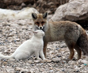 fox, cat, and animal image