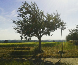 bench, travel, and tree image