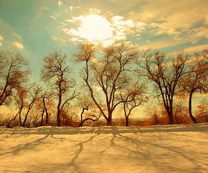 tree, sky, and sun image