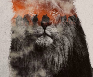 lion and background image