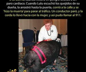 Animales, historia, and increible image