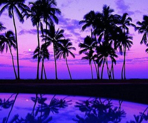 purple, beach, and summer image