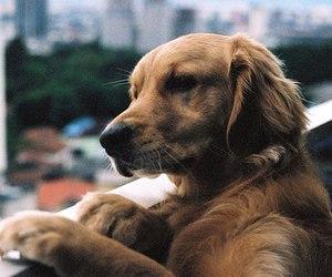 dog and animal image