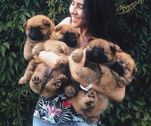 Chow, chow chow, and puppies image