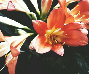 flower, lily, and yellow image