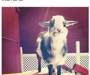 funny, goat, and happiness image