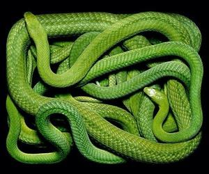 snake, green, and animal image