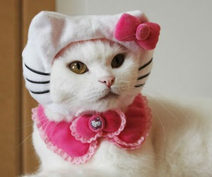 cat and hello kitty image