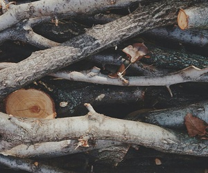 nature, wood, and tree image