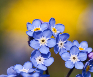nature blue flowers image