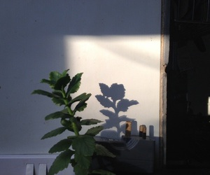 plants, green, and light image