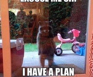funny, racoon, and guardians of the galaxy image