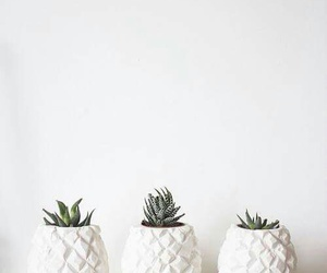 white, plants, and cactus image