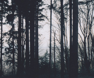dark forest, forest, and picture image