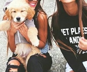 fashion and puppy image