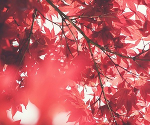 autumn, kawaii, and red image