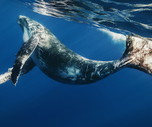 animal, ocean, and whale image