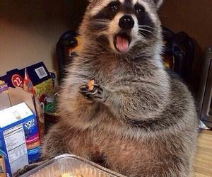 animal, raccoon, and food image