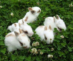 bunny, rabbit, and green image