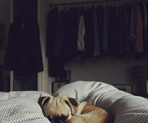 dog, puppy, and bed image