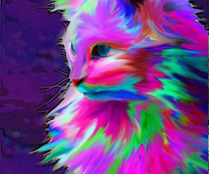 cat, colorful, and art image