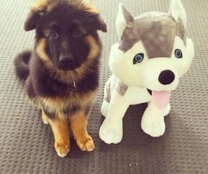 puppy- image