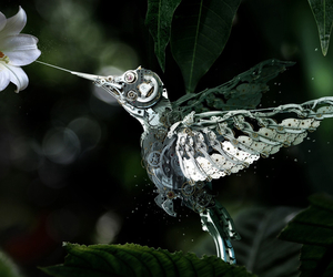bird, flowers, and hummingbird image