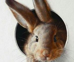 rabbits image