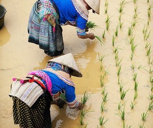 culture, rice, and Vietnam image