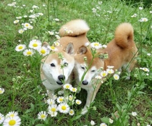 dog, flowers, and green image