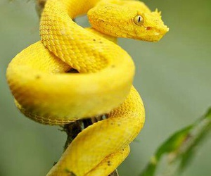 yellow snake photo image