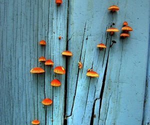 orange, blue, and mushroom image