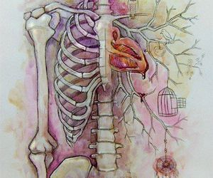 heart, skeleton, and art image