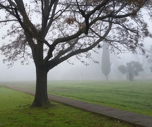 autumn, fog, and grass image