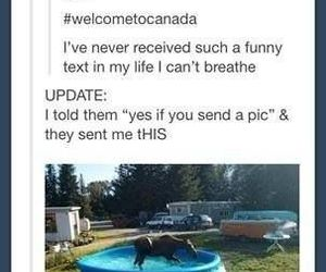 funny, canada, and tumblr image