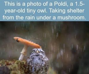 owl, poldi, and wtf fun facts image