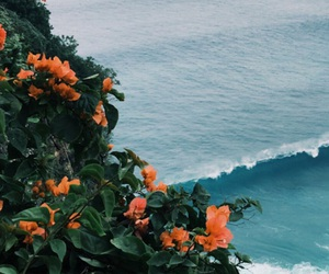 nature, flowers, and ocean image