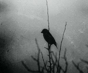 dark, bird, and black image