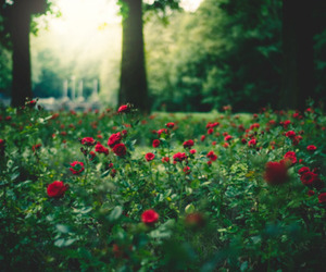 red and flowers image