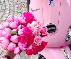 italy, peonies, and pink image