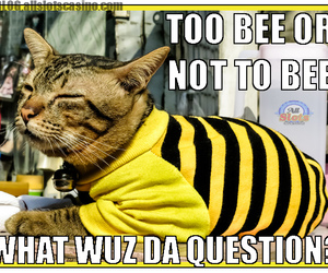 Hamlet, funny cats, and bee cat image