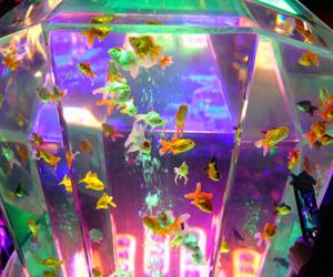 fish, aesthetic, and aquarium image